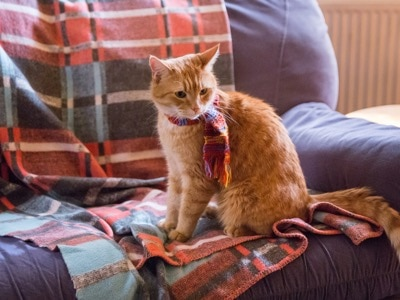 A Street Cat Named Bob coming soon to NOW TV